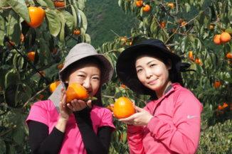 渋抜富士柿の販売終了いたしました