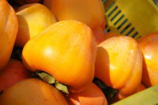 収穫時の富士柿