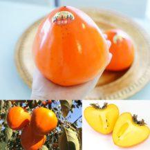 富士柿の形